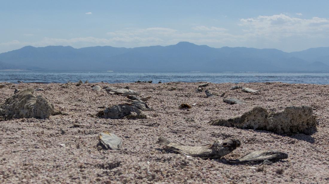 Beach of Dead Fish