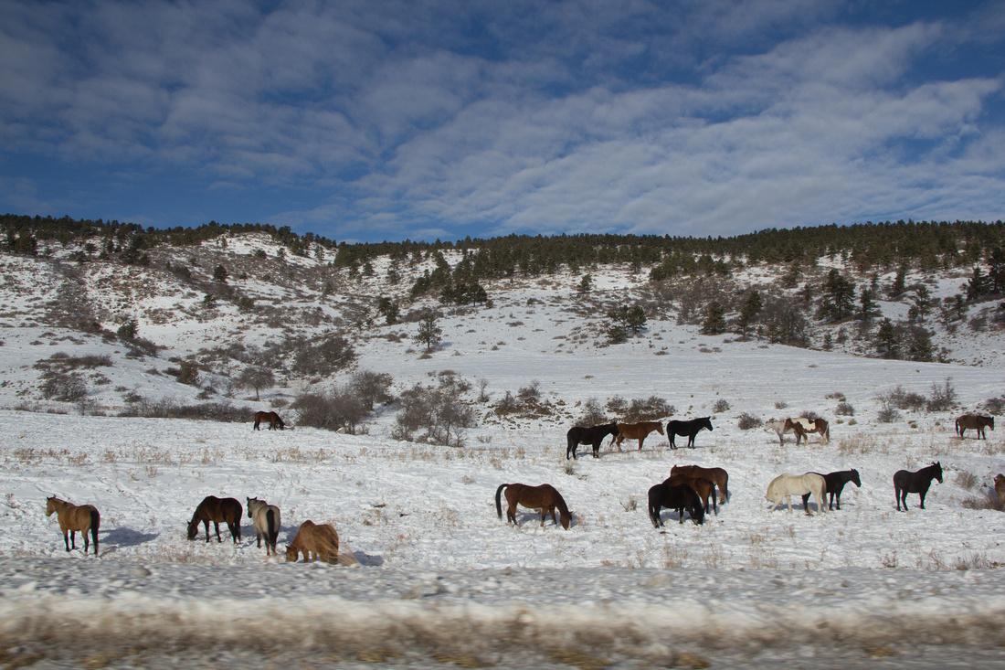 Day 3 - Horses