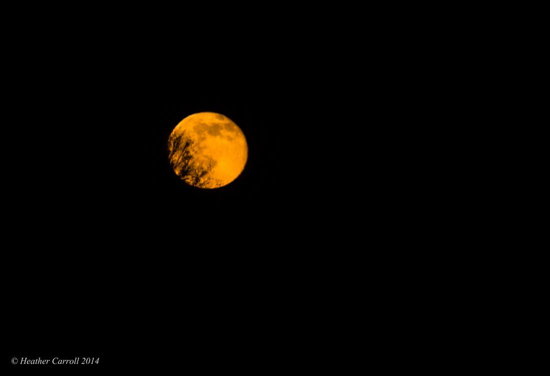 Rising Rose Moon