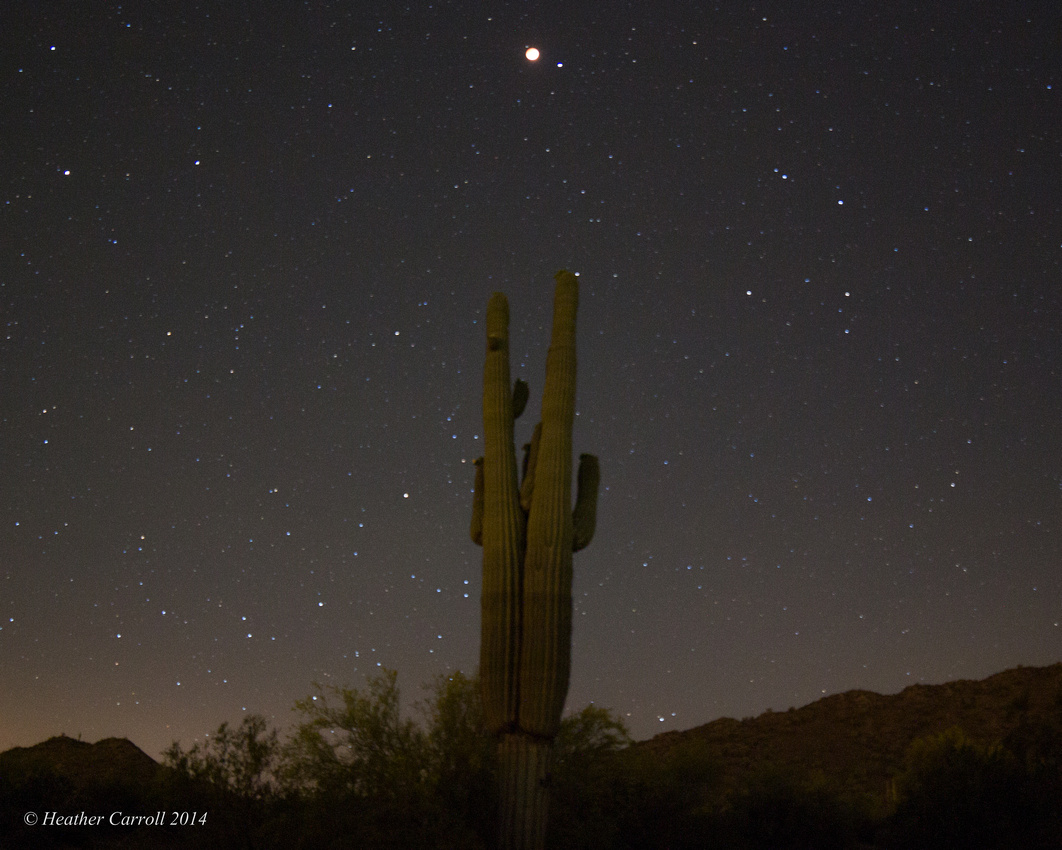 Blood Moon over Cactus